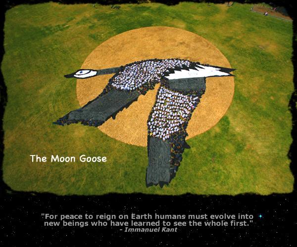 moongoosetorn